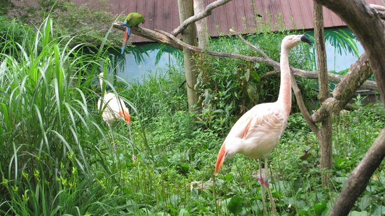 Catoctin Wildlife Preserve and Zoo: Flamingoes in the open viewing area.