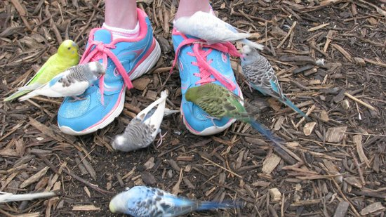 Catoctin Wildlife Preserve and Zoo: Parakeets picking at my daughters feet.