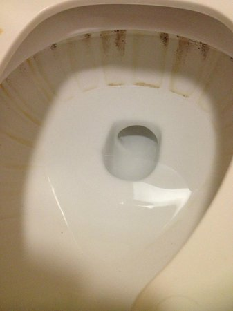 Rodeway Inn : Filthy Toilet Upon arrival photo 1