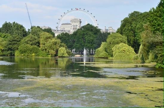 Laurence Summers Tour Guide : St james's park.