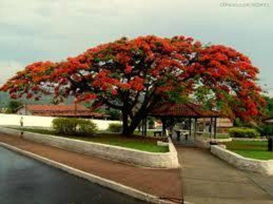Florestal Minas Gerais fonte: media-cdn.tripadvisor.com