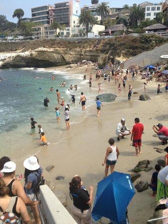 La Jolla Cove beach, low tide means more beach!