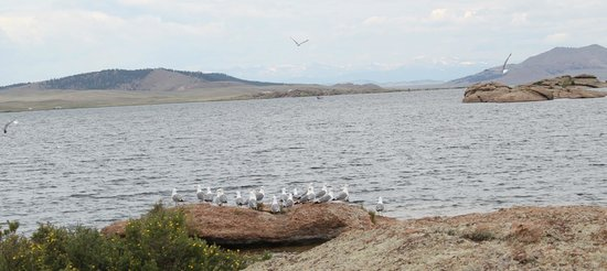 Eleven Mile State Park : A view of the the lake and the loquacious gulls