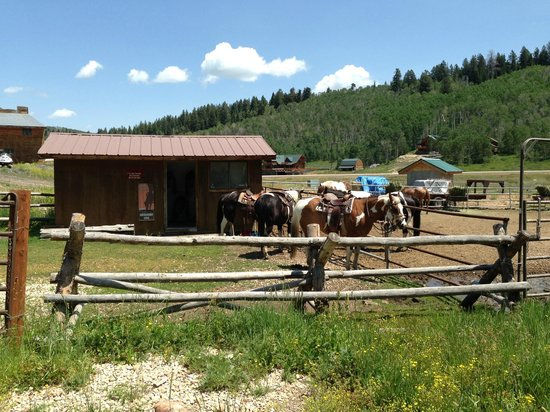 Daniels Summit Lodge: Horses for riding horseback