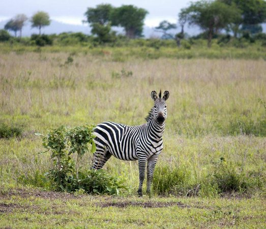 Selous Game Reserve: Safari from Nashera hotel to Mikumi