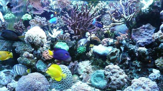 Good Friends: Gemütlich und klein, aber sehr freundlich mit einem schönem Aquarium