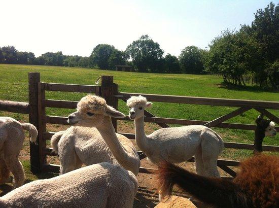 إيست أنجليا, UK: Liz's babies