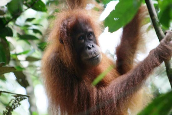Bukit Lawang Holiday