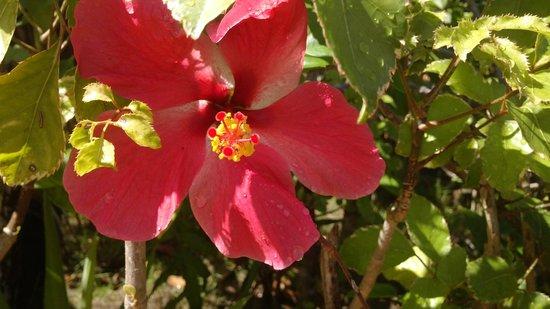Pousada Aldeia Portuguesa : Naturezza pousada