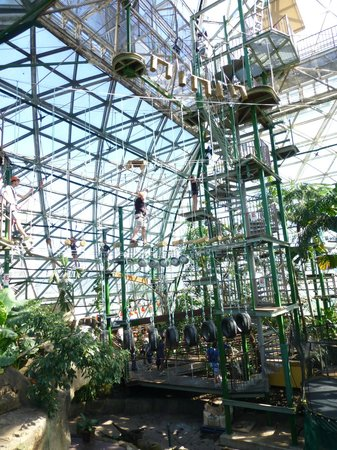 Amazing High Ropes Climb Picture Of Cairns Zoom And