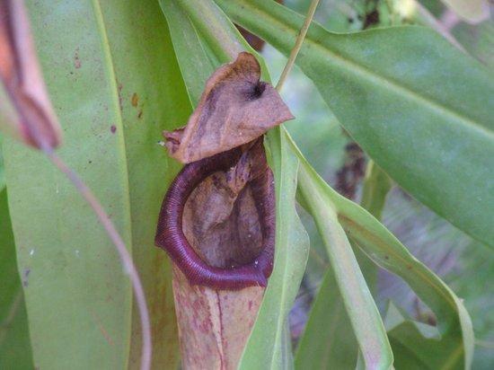 Jardin Exotique : acchiappa insetti