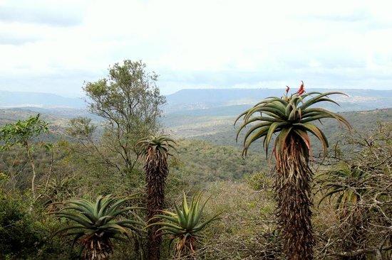 African Bird of Prey Sanctuary: Beautiful view