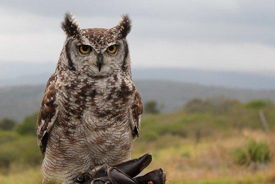 African Bird of Prey Sanctuary: Cape Eagle Owl