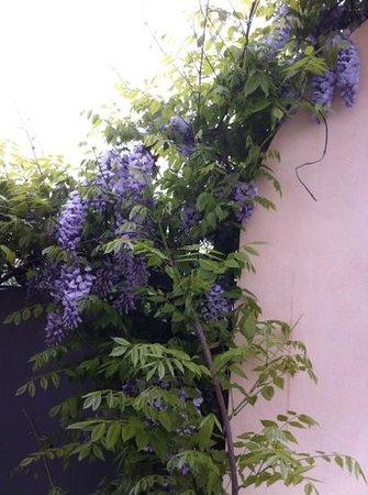 B&B Casale Ricci : fiori