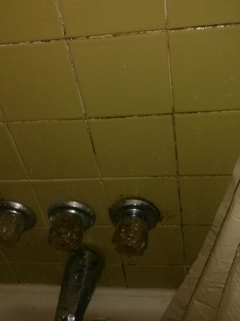 Budget Inn: Entire shower looked like this