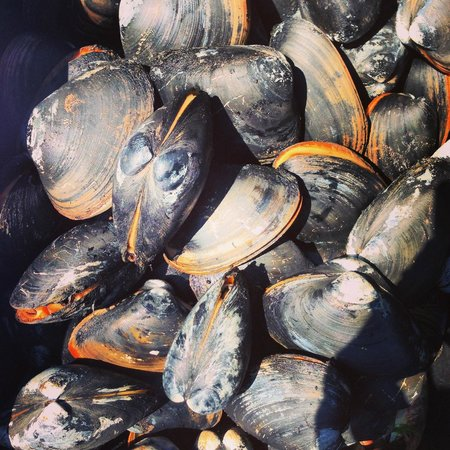Paradise On The Sea Adventures: Bar clams we dug up!