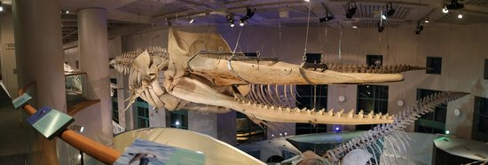 North Carolina Museum Of Natural Sciences Raleigh All You Need To Know Before Go With Photos Tripadvisor