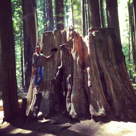 Shaw House: Redwoods are very close by