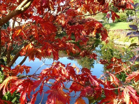 Holehird Gardens: Colours of early autumn