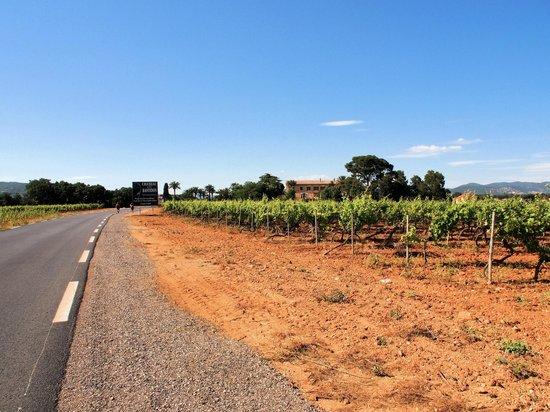 Camping Le Pansard: De weg tussen de wijngaarden naar La Londe les Maures