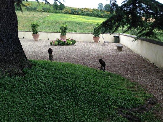 Villa Poggio Bartoli: Die Falken bewachen die Anlage.