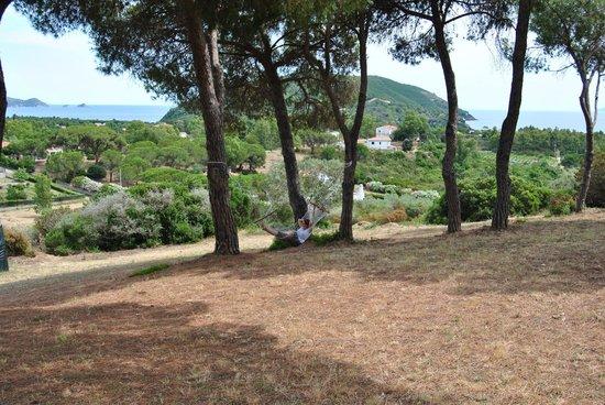 Residence Villa Conti: Panorama e relax