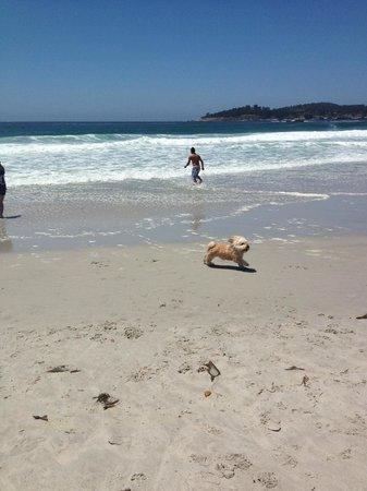 Inn By The Bay Monterey: Rusty enjoying the beach in Carmel!