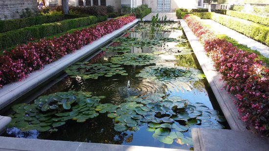 Tranquil zen lily pond with koi fish picture of for Koi pond zen