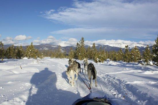 Dog Sled Rides of Winter Park: Dog sledding near the Continental Divide