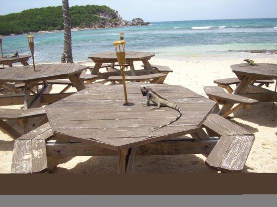 Iggies Beach Bar & Grill : Our lunch date