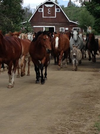 C Lazy U Ranch: The horses -- and Petey the donkey -- are off to pasture!