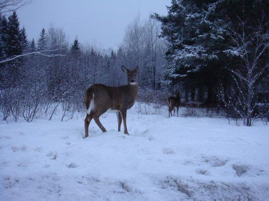 Airport Inn: deer on side of road
