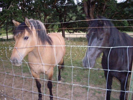 Airlie Farm B&B: Friendly horses