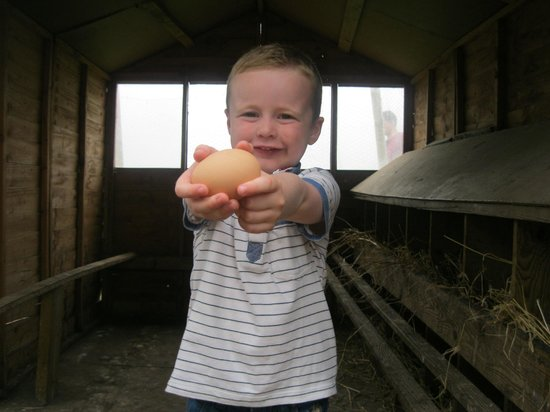 Feather Down Farms at College Farm: Collecting eggs