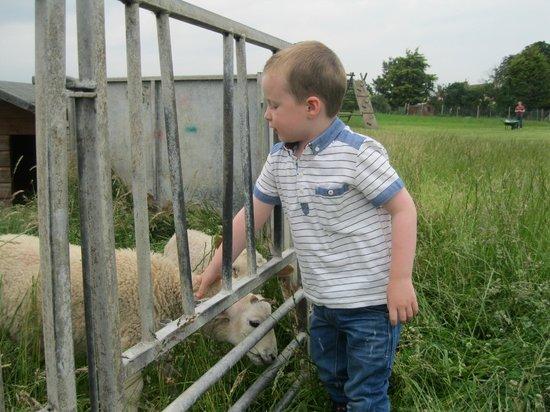 Feather Down Farms at College Farm: Farm animals