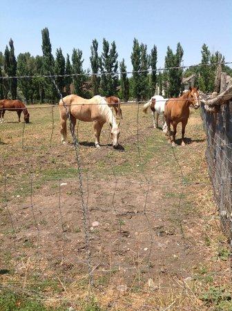 Wheeler Historic Farm: horses