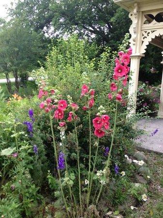Foxingham Farm Bed and Breakfast: Hollyhock garden