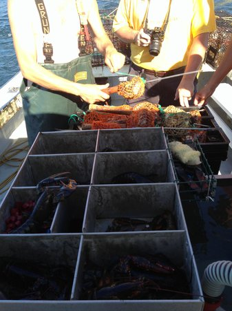 Lobster Boat Tour w/ Captain Clive Farrin : Separating the lobsters for measuring
