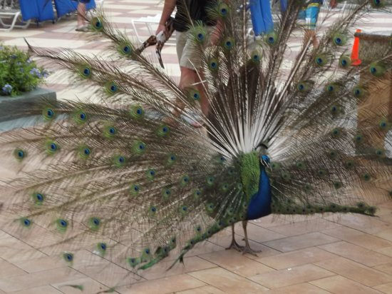 Jewel Dunn's River Beach Resort & Spa: Ms. Peacock