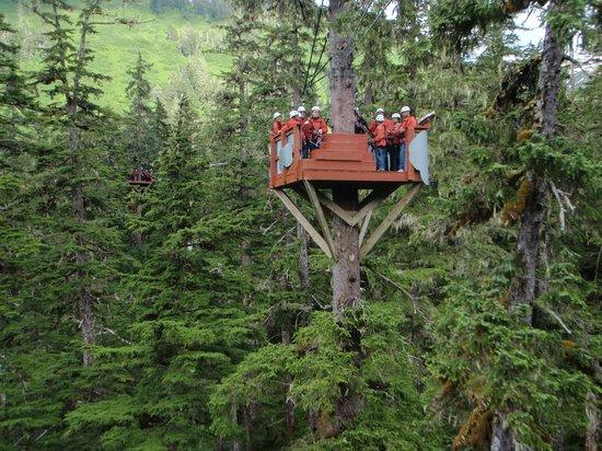 simple tree platforms. Fine Simple Alaska Zipline Adventures Five Ziplines From One Tree Platform To Another Intended Simple Tree Platforms G