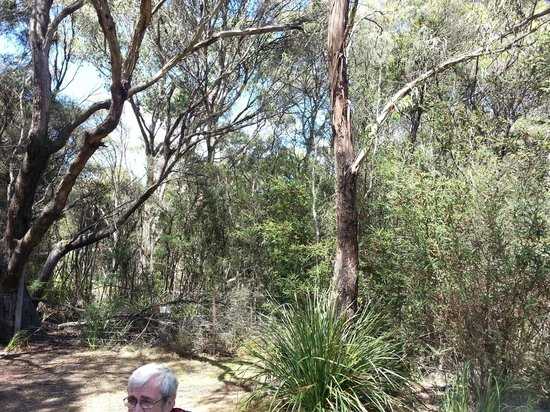 Crayfish Creek, Australien: Bush around campsite