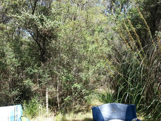 Crayfish Creek, Australia: Bush around the campsite
