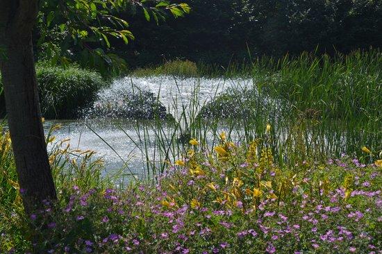 Capel Manor Gardens: Lake