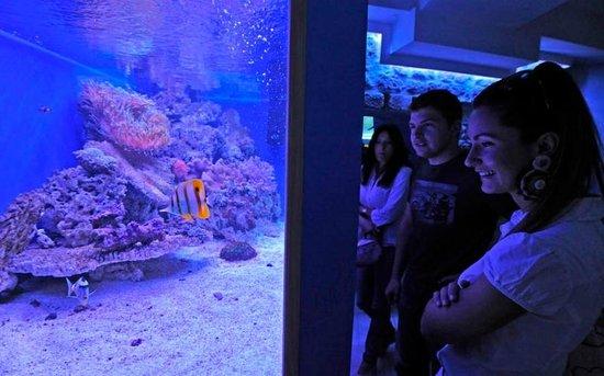 Szibenik, Chorwacja: Reef  tank