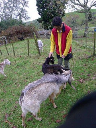 Green Glow Eco-Adventures: Goats in Paul's Little farm
