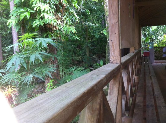 St. Lucia Rain Forest : View from tram ride over canopy