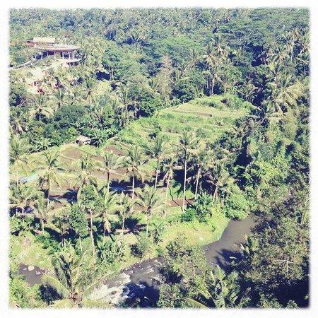 Room@Bali Hip Suite: OMG!!
