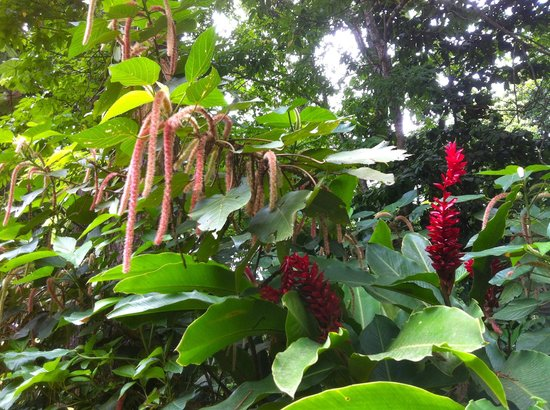 St. Lucia Rain Forest : Colourful plants we saw