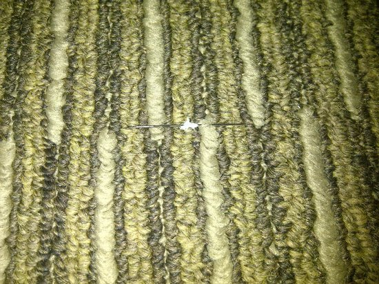 Federal Hotel : Needle in carpet