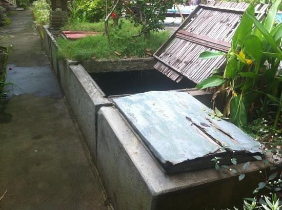 Bali Lovina Beach Cottages: the swimming pool filtration system next to our room. very noisy.